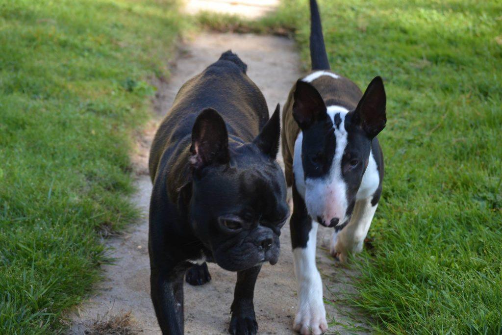 balade canine sur Saint Maur