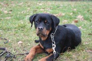 la promenade de votre chien sur Vitry