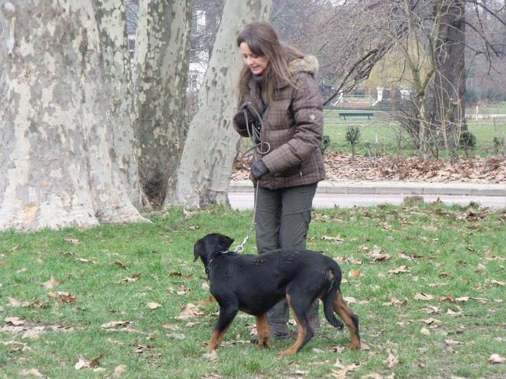 promenade canine à Fontenay sous Bois