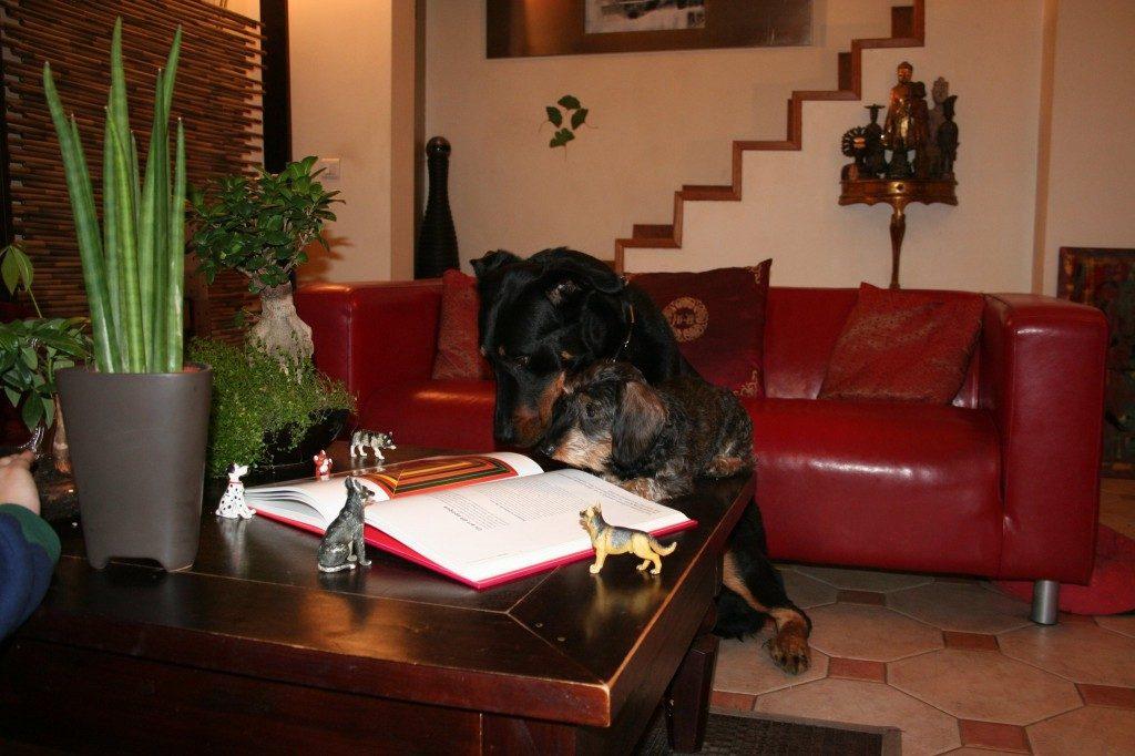 garderie canine dans le Val de Marne