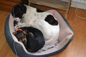 pension pour chiens et chiots en région parisienne