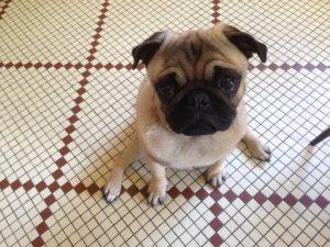 pension canine sur Maisons-Alfort