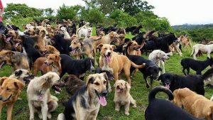 balade pour chien sur Joinville le Pont