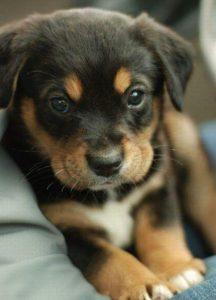 garderie canine en Ile de France