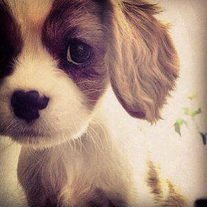 dressage canin proche de Paris