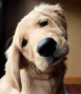 éducation de votre chien sur Vincennes