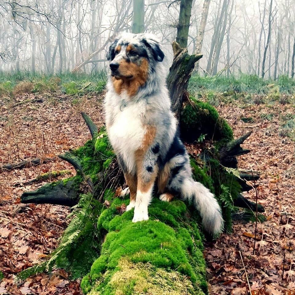 balade canine dans le Bois de Vincennes