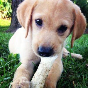 éduquer son jeune chien sur Paris